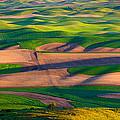 Palouse Ocean Of Wheat by Inge Johnsson