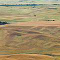 Palouse Palate by Jean Noren