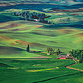 Palouse - Washington - Farms - 4 by Nikolyn McDonald