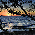 Pamlico Sound Through The Trees by Eric Albright