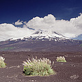 Pampas Grass And Old Lava Flow Llaima by Gerry Ellis