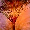 Pampas Grass - II by Susanne Van Hulst
