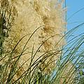 Pampas Grass by Nicki Bennett