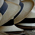 Panama Hats by Lainie Wrightson