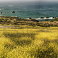 Panarama Spring On Califronia Coast By Denise Dube by Denise Dube