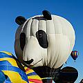 Panda Balloon by John Johnson