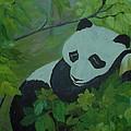 Panda by Christy Saunders Church