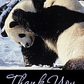 Panda Thank You Cards by Chris Scroggins