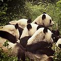 Pandamonium by Joan Carroll
