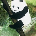 Pandamonium by Mary Kay