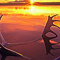 Panorama Caribou Antlers Whitefish Lake Nwt Canada by Dave Welling