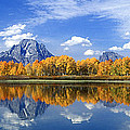 Panorama Fall Morning At Oxbow Bend Grand Tetons National Park by Dave Welling