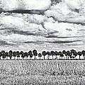 Panoramic Noir by Bruce Bain
