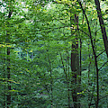Panoramic Shot With Green Trees by Peter Essick