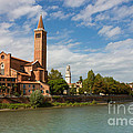 Panoramic View Of Dominican Church Of Sant'anastasia In Verona by Kiril Stanchev