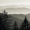 Panoramic View Of Trees With A Mountain by Panoramic Images