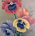 Pansies Bouquet by Florinel Nicolai Deciu