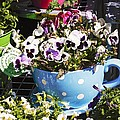 Cup Of Pansies by Cynthia Woods