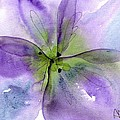Pansy 1 by Dawn Derman