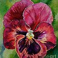Pansy Play by Susan Herber