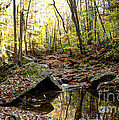 Panther Branch In Fall by Paul Mashburn