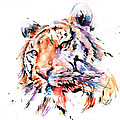 Panthera Tiger II by Stephie Butler
