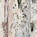 Paper Bark Astract by Karen E Camilleri