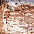 Paper Bark Background by Tim Hester