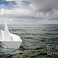 Paper Boat by Carlos Caetano
