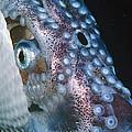Paper Nautilus Port Phillip Bay by D. & E. Parer-Cook
