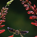 Paper Wasp in Flight by Stephen Dalton