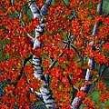Paper White Birch Reflections by Janine Riley