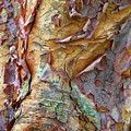 Paperbark Abstract by Jessica Jenney