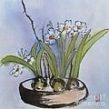 Paperwhites by Caryn Coville