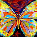 Papillon Colore by Helena Wierzbicki