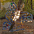 Papillon by Katia Weyher