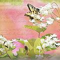 Papillon by Paulette B Wright