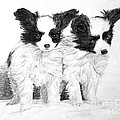 Papillon Puppies by Shirley Miller