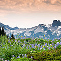 Paradise Meadows And The Tatoosh Range by Jeff Goulden