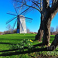 Paradise Park Windmill by Catherine Reusch Daley