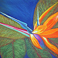 Paradise Pastel by Patricia Beebe