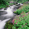 Paradise River And Spring Wildflowers by Tim Fitzharris