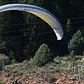Paraglider by Susan Herber
