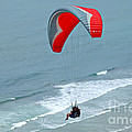 Paragliding At Torrey Pines by Anna Lisa Yoder