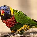 Parakeet With Treat by Terri Morris