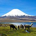 Parinacota Volcano Lake Chungara Chile by Kurt Van Wagner