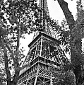 Paris Eiffel Tower by Phill Petrovic