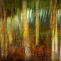 Park #8. Memory Of Trees by Alfredo Gonzalez