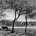 Park Bench by Ann Bridges