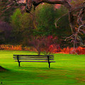 Park Bench by Bruce Nutting